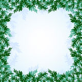 Christmas branches background. The illustration of blue Background with new year branches. Vector image Royalty Free Stock Photo