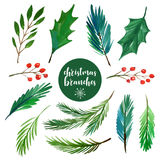 Christmas branches collection Royalty Free Stock Photos