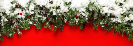 Christmas branches covered in snow Royalty Free Stock Images
