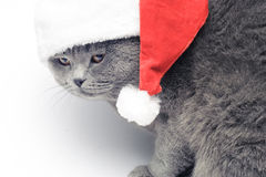 Christmas british cat in red santa hat Royalty Free Stock Photos