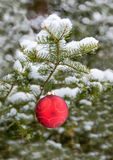 Christmas Bulb on a Spruce Tree Stock Photography