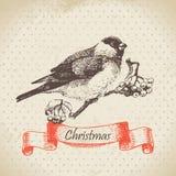 Christmas bullfinch and ashberry Stock Photography