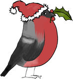 Christmas bullfinch. Bullfinch dressed up for Christmas Royalty Free Stock Photos