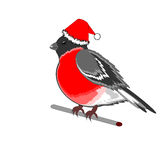 A Christmas bullfinch on a white background Royalty Free Stock Photos