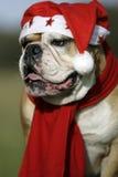 Christmas-bully Stock Photography