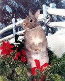 Christmas Bunny. A little grey bunny sits in evergreen, poinsettias and Christmas bow Royalty Free Stock Images