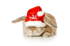 Christmas bunny. Rabbit wearing santa hat  on white background Royalty Free Stock Photos