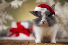 Christmas bunny, santa baby red hat. Holiday Christmas bunny in Santa hat on gift box background Stock Photos