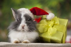 Christmas bunny, santa baby red hat. Holiday Christmas bunny in Santa hat on gift box background Royalty Free Stock Photos