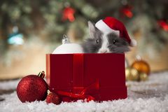 Christmas bunny, santa baby red hat. Holiday Christmas bunny in Santa hat on gift box background Stock Image