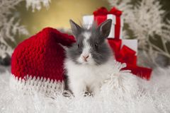Christmas bunny, santa baby red hat. Holiday Christmas bunny in Santa hat on gift box background Stock Photo