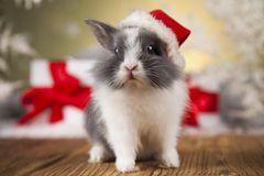Christmas bunny, santa baby red hat. Holiday Christmas bunny in Santa hat on gift box background Royalty Free Stock Photography