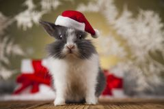 Christmas bunny, santa baby red hat. Holiday Christmas bunny in Santa hat on gift box background Royalty Free Stock Images