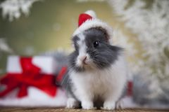 Christmas bunny, santa baby red hat. Holiday Christmas bunny in Santa hat on gift box background Stock Photography