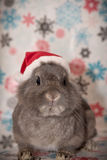 The Christmas Bunny. Santa has a new helper, and he is hopping with joy at the chance to spread some holiday cheer Royalty Free Stock Photography
