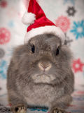 The Christmas Bunny. Santa has a new helper, and he is hopping with joy at the chance to spread some holiday cheer Royalty Free Stock Photos