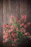 Christmas Bush Wood Background. Christmas Bush flowers on a wood background. Christmas Bush is an Australian plant that has bright red flowers that bloom around Royalty Free Stock Images