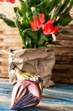 Christmas cactus Royalty Free Stock Images