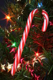 Christmas Candy. Close up of a christmas candy cane on the tree Stock Photography