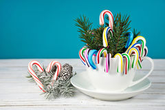 Christmas candy cane and pine bouquet Royalty Free Stock Image