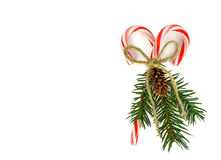 Christmas candy cane and pine bouquet Royalty Free Stock Photography