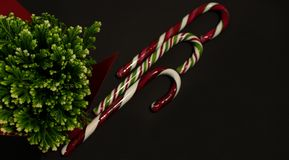 Christmas candy canes and green plant stock photography