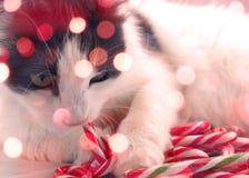 Christmas candy cat Stock Photos