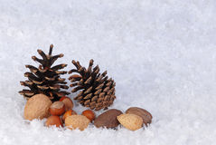 Christmas card background of pine cones and nuts Royalty Free Stock Image