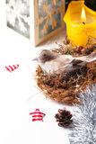 Christmas card with bird in nest Stock Image