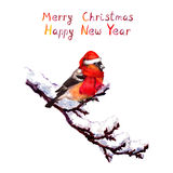 Christmas card - bird in red hat at branch with snow. Watercolor Stock Images