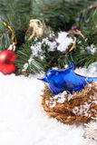 Christmas card with blue bird in nest Stock Images