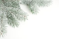 Christmas card, branch in the snow Royalty Free Stock Photography
