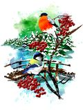 Christmas card with a bullfinch and a tit on a mountain ash. stock images