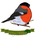 Christmas card with bullfinch. Stock Images