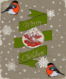 Christmas card with bullfinch. Royalty Free Stock Images