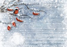 Christmas card with bullfinches and berry. Happy holidays. Stock Photo