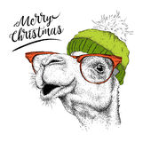 Christmas card with camel in winter hat. Merry Christmas lettering design. Vector illustration Stock Image