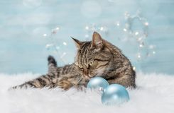 Christmas card with cat. And christmas balls Royalty Free Stock Images