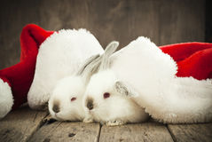 Christmas Card with Couple White Rabbits in Caps Royalty Free Stock Photo