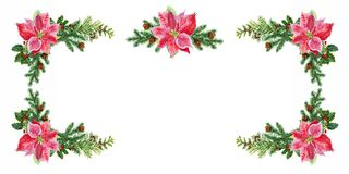 Christmas card. Christmas decorations of spruce and poinsettia. Watercolor. Christmas card. Christmas decorations on spruce, mistletoe, TUI and poinsettia Stock Images