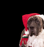 Christmas card dog Stock Photos