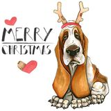 Christmas card with a dog of the basset hound breed. Mary Christmas. Isolated on white background. stock illustration