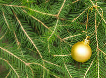 Christmas card with fir tree and christmas ball Royalty Free Stock Photos