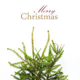 Christmas card with Home Festive Fir tree branches, not adorned. Royalty Free Stock Photography