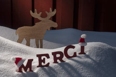 Christmas Card Moose, Snow, Merci Mean Thanks, Santa Hat Royalty Free Stock Photos