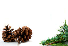 Christmas card with pine cones and spruce branches Stock Photo