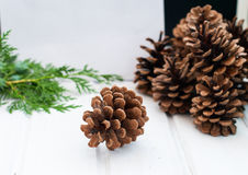 Christmas card with pine cones and spruce branches Stock Images