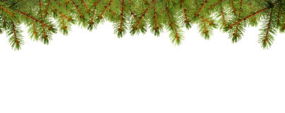 Christmas card with pine green Stock Images