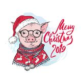 Christmas card. Portrait of the pink Pig in a red knitted nordic sweater a white background with lettering. Vector stock illustration