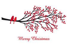 Christmas card with red berries and birds, vector Stock Images